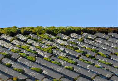 Which Roofing Shingles Are Algae Resistant