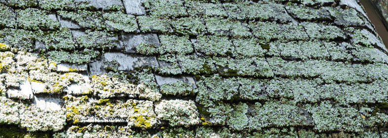 How to Prevent Algae on Your Stone Roof Shingles